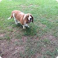 Adopt A Pet :: Lizzy - Northport, AL