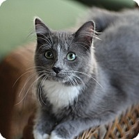 Adopt A Pet :: Bounce - Richmond, VA