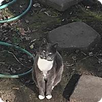 Adopt A Pet :: Max - Weimar, CA