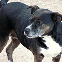 Adopt A Pet :: Bossy Mom - Quinlan, TX