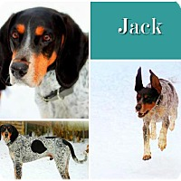 Adopt A Pet :: Jack IS ADOPTED! - Ontario, ON