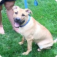 Adopt A Pet :: Axel - Schaumburg, IL