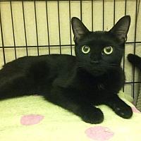 Adopt A Pet :: Brandy - East Brunswick, NJ