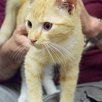 Adopt A Pet :: Despacito - Washington, DC