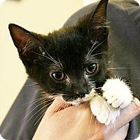 Adopt A Pet :: Mildred - Secaucus, NJ