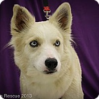 Adopt A Pet :: Alloy - Broomfield, CO