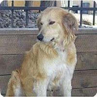 Adopt A Pet :: Lindy - Denver, CO