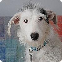 Adopt A Pet :: Mahalo - Milan, NY