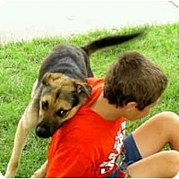 Adopt A Pet :: Duke - Alliance, OH