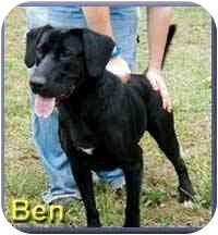 Labrador Retriever/Pointer Mix Dog for adoption in Aldie, Virginia - Benson