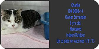 Domestic Mediumhair Cat for adoption in Greenville, Kentucky - Charlie