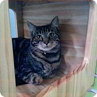 Adopt A Pet :: Jacob - Tunica, MS