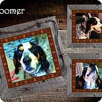 Adopt A Pet :: Boomer ADOPTED - Ontario, ON