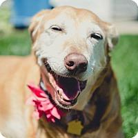 Adopt A Pet :: Molly - St. Cloud, MN