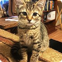 Adopt A Pet :: Oakley - North Wilkesboro, NC