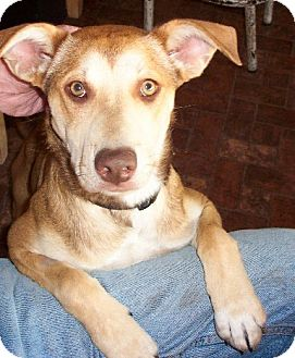Terrier (Unknown Type, Medium) Mix Dog for adoption in Alturas, California - Taffy
