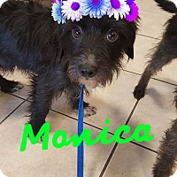 Adopt A Pet :: Monica - Burleson, TX