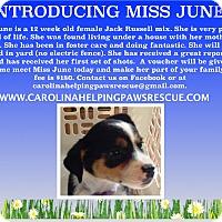 Adopt A Pet :: June - Sumter, SC