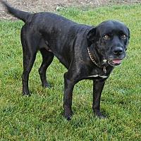 Adopt A Pet :: Zena - Aurora, IL