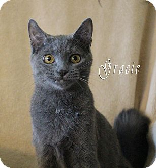 Domestic Shorthair Kitten for adoption in Chester, Maryland - Gracie