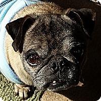 Adopt A Pet :: Beansy - Austin, TX