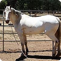 Adopt A Pet :: Hopi - El Dorado Hills, CA