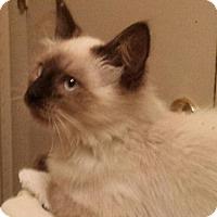 Adopt A Pet :: Kiley - Columbus, OH