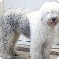 Adopt A Pet :: Kate - Norwalk, CT