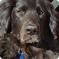Adopt A Pet :: Winston - Albemarle, NC