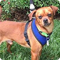 Adopt A Pet :: Nikoli - Santa Cruz, CA