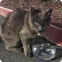 Adopt A Pet :: Little - Novato, CA