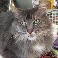 Adopt A Pet :: Noelle - Oak Ridge, TN
