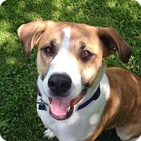 Adopt A Pet :: CARMEL - Coudersport, PA