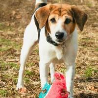 Adopt A Pet :: Hunter - New Freedom, PA