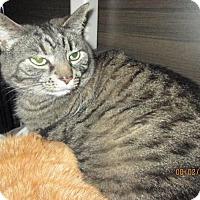 Adopt A Pet :: Rexy - Breinigsville, PA
