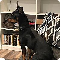Adopt A Pet :: Jax - Los Banos, CA