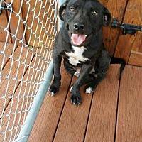 Adopt A Pet :: Bob - Waycross, GA