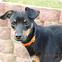 Adopt A Pet :: Harley - Nashville, TN
