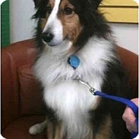 Adopt A Pet :: Ringo - Indiana, IN