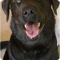 Adopt A Pet :: Max - Altmonte Springs, FL