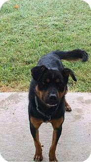 Shepherd (Unknown Type) Mix Dog for adoption in Okmulgee, Oklahoma - Happy