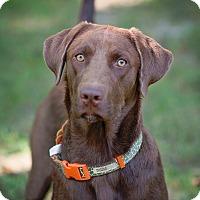 Adopt A Pet :: Flower - Lewisville, IN