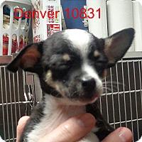 Adopt A Pet :: Denver - Greencastle, NC