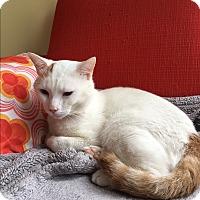 Adopt A Pet :: Roberto - Brooklyn, NY