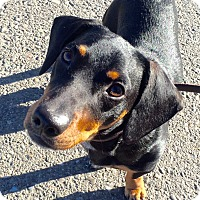 Adopt A Pet :: Frankie - Vacaville, CA