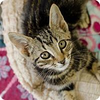 Adopt A Pet :: Hershey - Greenwood, SC