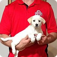 Adopt A Pet :: Jackson - South Euclid, OH