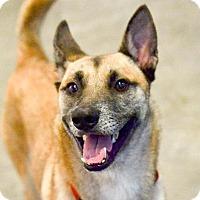 Adopt A Pet :: Ares - San Francisco, CA