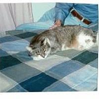 Adopt A Pet :: Felix - Polson, MT