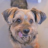 Adopt A Pet :: Randolph - Atlanta, GA